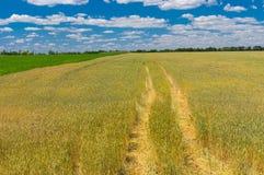 Ajardine com o céu nebuloso, campo de trigo e a trilha azuis para dentro, Ucrânia central Foto de Stock Royalty Free