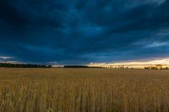 Ajardine com o céu tormentoso escuro sobre campos no crepúsculo Imagens de Stock