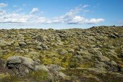 Ajardine com o campo de lava coberto com o musgo, céu nebuloso azul, Islândia Fotos de Stock
