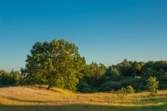 Ajardine com o carvalho verde em horas ensolaradas do dia Fotos de Stock