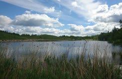 Ajardine com o lago através da grama alta no dia bonito em Lituânia Imagens de Stock Royalty Free