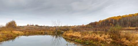 Ajardine com o lago da floresta no dia chuvoso do outono Imagens de Stock Royalty Free