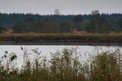 Ajardine com o lago da floresta no dia chuvoso do outono Foto de Stock Royalty Free