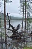Ajardine com o lago sombrio da madeira lançada à costa em um nebuloso Imagens de Stock
