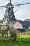 Ajardine com o moinho de vento holandês tradicional da grão e os dois cavalos imagem de stock royalty free