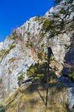 Ajardine com o parque nacional Buila de montanhas rochosas, Carpathians Foto de Stock Royalty Free