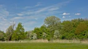 Ajardine com o prado verde luxúria com junco e a floresta na reserva natural de Bourgoyen, Ghent Fotografia de Stock Royalty Free