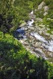 Ajardine com o rio com aguas potáveis, montanha de Pirin Imagens de Stock Royalty Free