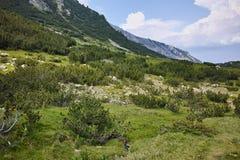 Ajardine com o rio com aguas potáveis, montanha de Pirin Foto de Stock