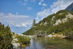 Ajardine com o rio com aguas potáveis, montanha de Pirin Fotografia de Stock Royalty Free