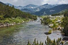 Ajardine com o rio com aguas potáveis, montanha de Pirin Fotografia de Stock