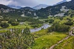 Ajardine com o rio com aguas potáveis, montanha de Pirin Fotos de Stock Royalty Free