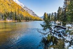 Ajardine com o rio em montanhas de Altai, Rússia Imagem de Stock Royalty Free