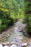 Ajardine com o rio isolado da montanha entre árvores verdes luxúrias Imagem de Stock Royalty Free