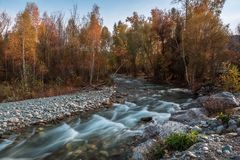 Ajardine com o rio nas montanhas de Altai, Rússia Imagens de Stock Royalty Free