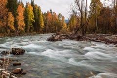 Ajardine com o rio nas montanhas de Altai, Rússia Fotos de Stock Royalty Free