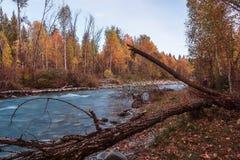 Ajardine com o rio nas montanhas de Altai, Rússia Fotografia de Stock Royalty Free