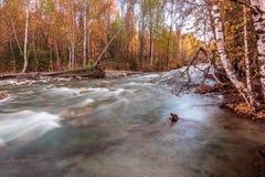 Ajardine com o rio nas montanhas de Altai, Rússia Foto de Stock Royalty Free