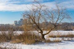 Ajardine com o rio próximo congelado e a opinião da árvore de salgueiro em uma baixa na cidade de Dnepr, Ucrânia Imagem de Stock Royalty Free