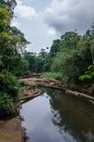 Ajardine com o rio tropical que passa pacificamente pela floresta tropical luxúria de Nigéria, África Foto de Stock