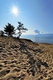 Ajardine com o sol na costa arenosa Imagens de Stock