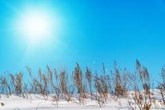 Ajardine com o sol no céu azul e na grama seca Foto de Stock