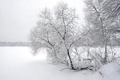 Ajardine com o trajeto coberto de neve na borda da floresta e do rio congelado em um dia de inverno nebuloso Imagens de Stock Royalty Free