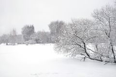Ajardine com o trajeto coberto de neve na borda da floresta e do rio congelado em um dia de inverno nebuloso Fotos de Stock