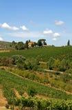 Ajardine com o vinhedo na Toscânia, Italy Imagem de Stock