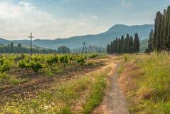 Ajardine com o vinhedo perto da cidade de Alushta na península crimeana Imagem de Stock Royalty Free
