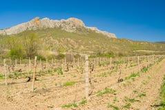 Ajardine com o vinhedo perto da escala de Taraktash em montanhas crimeanas Imagens de Stock