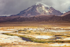 Ajardine com o vulcão de sajama no fundo, platô nat Fotografia de Stock