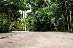 Ajardine com olhar tropical no monte de Penang, Malásia Fotografia de Stock Royalty Free