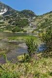 Ajardine com os lagos fish perto do pico de Sivrya, montanha de Pirin Imagem de Stock Royalty Free