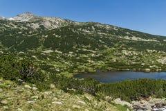 Ajardine com os lagos fish perto do pico de Sivrya, montanha de Pirin Fotos de Stock Royalty Free
