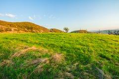 Ajardine com os montes da grama verde e o céu claro Foto de Stock