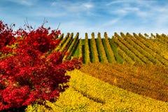 Ajardine com os montes dos vinhedos e das folhas do vermelho Foto de Stock Royalty Free
