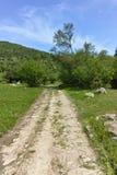 Ajardine com os montes verdes perto da vila de Fotinovo na montanha de Rhodopes, Bulgária Foto de Stock Royalty Free