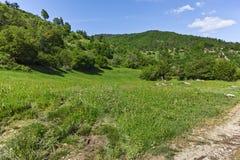 Ajardine com os montes verdes perto da vila de Fotinovo na montanha de Rhodopes, Bulgária Imagens de Stock