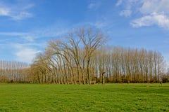 Ajardine com os prados verdes luxúrias e os aldertrees altos no campo flamengo Imagem de Stock Royalty Free
