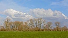Ajardine com os prados verdes luxúrias e as árvores desencapadas altas no campo flamengo Imagens de Stock