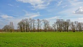 ajardine com os prados verdes luxúrias e as árvores desencapadas grandes no campo flamengo Imagem de Stock