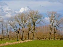 Ajardine com os prados verdes luxúrias e as árvores do amieiro e de salgueiro no campo flamengo Foto de Stock Royalty Free