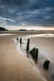 Ajardine com os quebra-mar velhos que projetam-se da areia na baía de Rhosilli Fotos de Stock Royalty Free