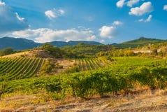 Ajardine com os vinhedos na península crimeana no outono Fotografia de Stock Royalty Free