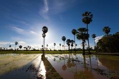 Ajardine com a palma, a estrada e as nuvens de açúcar da grama verde Imagens de Stock Royalty Free