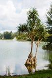 Ajardine com palmeiras, e a construção na distância Imagens de Stock Royalty Free