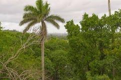 Ajardine com palmeiras e uma cidade coberto de vegetação com as árvores Fotos de Stock