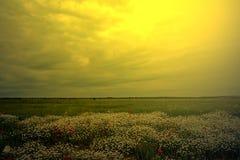 Ajardine com papoilas e camomila na luz 5 do por do sol Fotos de Stock Royalty Free