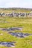 Ajardine com parede de pedra e vegetação na praia de Doolin, condado Clare, Irlanda Fotos de Stock Royalty Free
